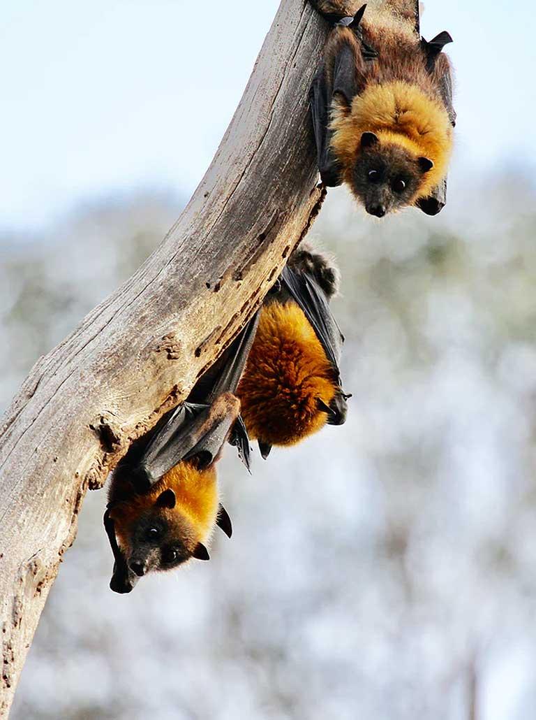 bat-img
