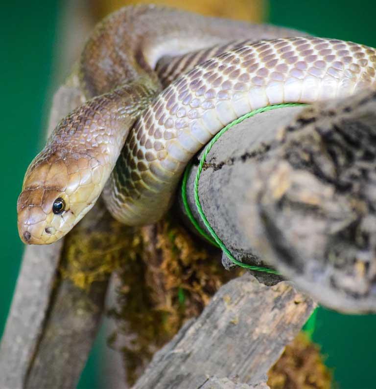 snake-img