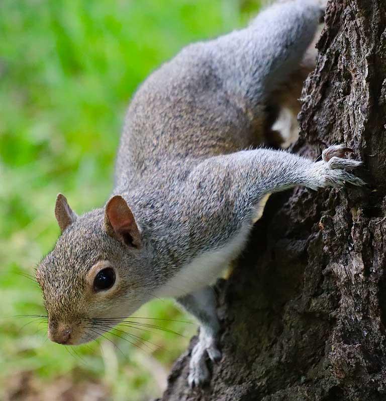 squirrel-img1
